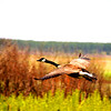 """The Protector"" by RJ, 17  