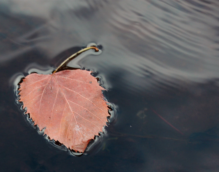 """Leaf on Water"" by Chris 