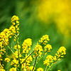 """Yellow Beauty"" by Cody, 15  