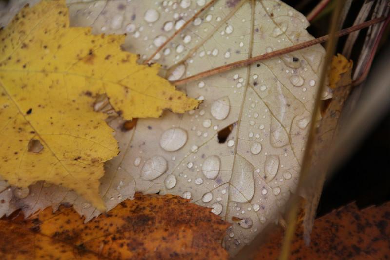 """Rain on Tree Leaves"" by Jack, 16 | November 2018"