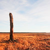 """Lone Tree"" by Anonymous, 14  
