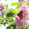 """Butterflies in Heaven"" by Neil, 16  