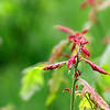 """Pink Flower"" by Cody, 15  