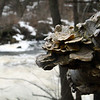 """Riverside Mushrooms"" by Austin, 16  