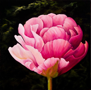 Name: Angel Tulip (SOLD) Medium: Oil Size: 20 X 20 Price: $500 Contact: Audrey McLeod E-Mail: riverartist@aol.com