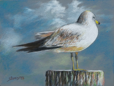 Name of Picture: SEAGULL Medium: COLORED PENCIL ON PANEL Size: 8x10 Price: $100.00 Contact: 843-454 6038 E-Mail: dennystevenso@aol.com
