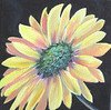 Name: Flower Power #1<br /> Medium: Oil  (Gallery Wrapped)<br /> Size: 6 X 6 <br /> Price: $45<br /> Contact: Jackie Stacharowski<br /> E-Mail: Artist Jackie@yahoo.com