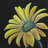 Name: Flower Power #2<br /> Medium: Oil  (Gallery Wrapped)<br /> Size: 6 X 6 <br /> Price: $45<br /> Contact: Jackie Stacharowski<br /> E-Mail: Artist Jackie@yahoo.com
