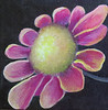 Name: Flower Power #3<br /> Medium: Oil  (Gallery Wrapped)<br /> Size: 6 X 6 <br /> Price: $45<br /> Contact: Jackie Stacharowski<br /> E-Mail: Artist Jackie@yahoo.com