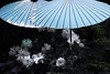 Kit Nagamura - Blue Parasols
