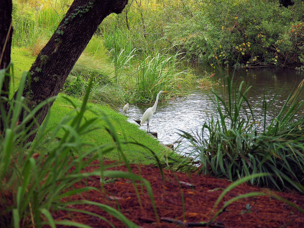 "Name: Egret Creek Fishing<br /> Medium: Photography<br /> Size: <br /> Price: $<br /> Contact: Mike Covington<br /> E-Mail: mike@lowcountryphotos.com <br /> For a print of this work, go to  <a href=""http://www.lowcountryart.org"">http://www.lowcountryart.org</a>"