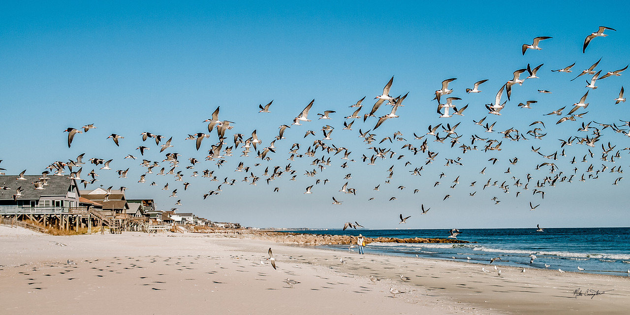 "Name: The Bird Lady<br /> Medium: Photography<br /> Size: <br /> Price: $<br /> Contact: Mike Covington<br /> E-Mail: mike@lowcountryphotos.com <br /> For a print of this work, go to  <a href=""http://www.lowcountryart.org"">http://www.lowcountryart.org</a>"