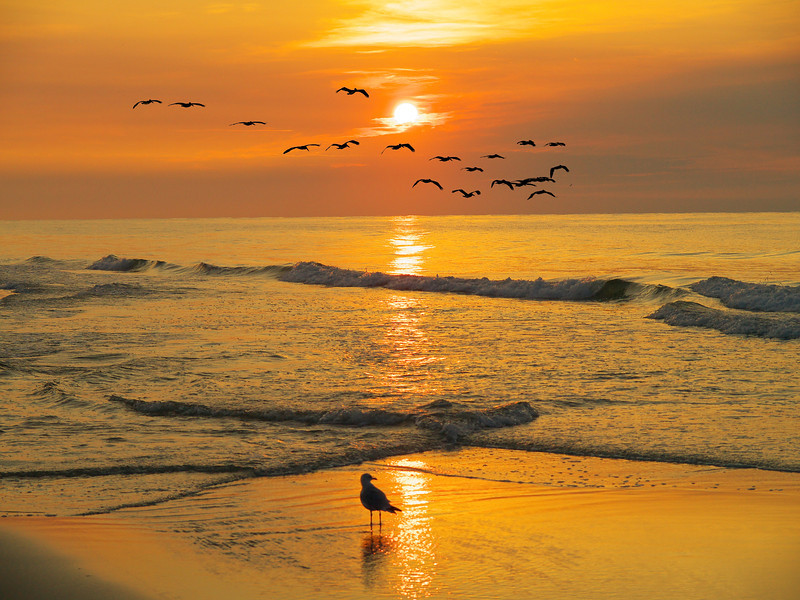 """Name: Pawleys Island Sunrise<br /> Medium: Photography<br /> Size: <br /> Price: $<br /> Contact: Mike Covington<br /> E-Mail: mike@lowcountryphotos.com <br /> For a print of this work, go to  <a href=""""http://www.lowcountryart.org"""">http://www.lowcountryart.org</a>"""