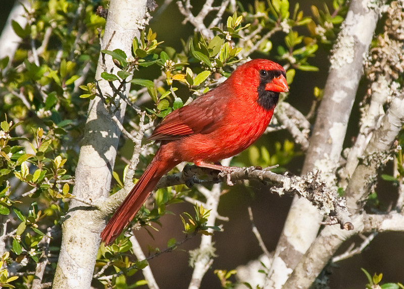 """Name: Certainly Red<br /> Medium: Photography<br /> Size: <br /> Price: $<br /> Contact: Mike Covington<br /> E-Mail: mike@lowcountryphotos.com <br /> For a print of this work, go to  <a href=""""http://www.lowcountryart.org"""">http://www.lowcountryart.org</a>"""