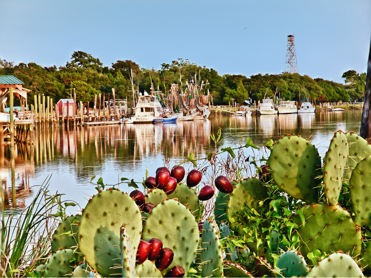 "Name: Cactus by the Sea<br /> Medium: Photography<br /> Size: <br /> Price: $<br /> Contact: Mike Covington<br /> E-Mail: mike@lowcountryphotos.com <br /> For a print of this work, go to  <a href=""http://www.lowcountryart.org"">http://www.lowcountryart.org</a>"