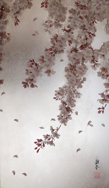 Shoko Ohta - Weeping Cherry Blossoms 枝垂桜