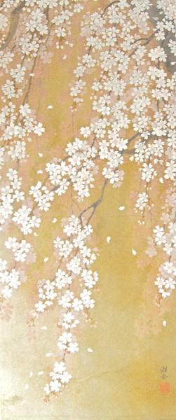 Shoko Ohta - Weeping Cherry