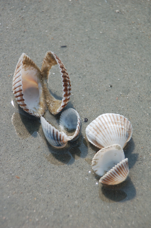 Name: She Sells Sea Shells<br /> Medium: Photography<br /> Size:<br /> Price: $<br /> Contact: Suzanne Gaff<br /> E-Mail: sdgaff@sc.rr.com