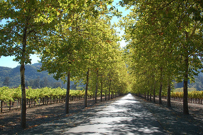 Name: Napa in the Fall Medium: Photography Size: Price: $ Contact: Suzanne Gaff E-Mail: sdgaff@sc.rr.com