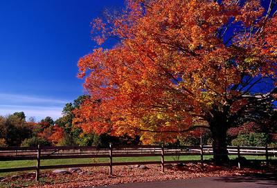 Name: Rural road maple Medium: Photography Price: $ Contact: William (Bill) McEvoy E-Mail: mcdu13@sc.rr.com