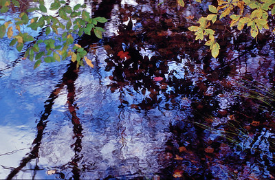 Name: Stream Reflections Medium: Photography Price: $ Contact: William (Bill) McEvoy E-Mail: mcdu13@sc.rr.com