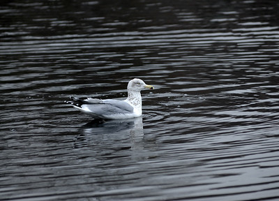 Name: Gull Medium: Photography Price: $ Contact: William (Bill) McEvoy E-Mail: mcdu13@sc.rr.com