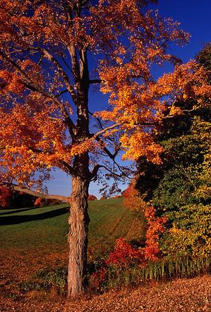 Name: shag bark hickory Medium: Photography Price: $ Contact: William (Bill) McEvoy E-Mail: mcdu13@sc.rr.com