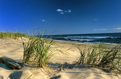 Name: Sea Shore Dunes Medium: Photography Price: $ Contact: William (Bill) McEvoy E-Mail: mcdu13@sc.rr.com