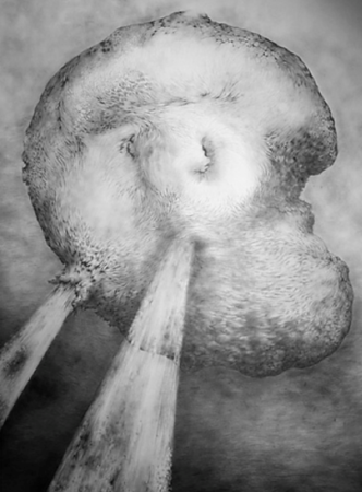 Yim Maline; Scar 2; Graphite on paper; 32 x 44 in ; 2010 - No longer available
