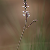 Sandhill Flower