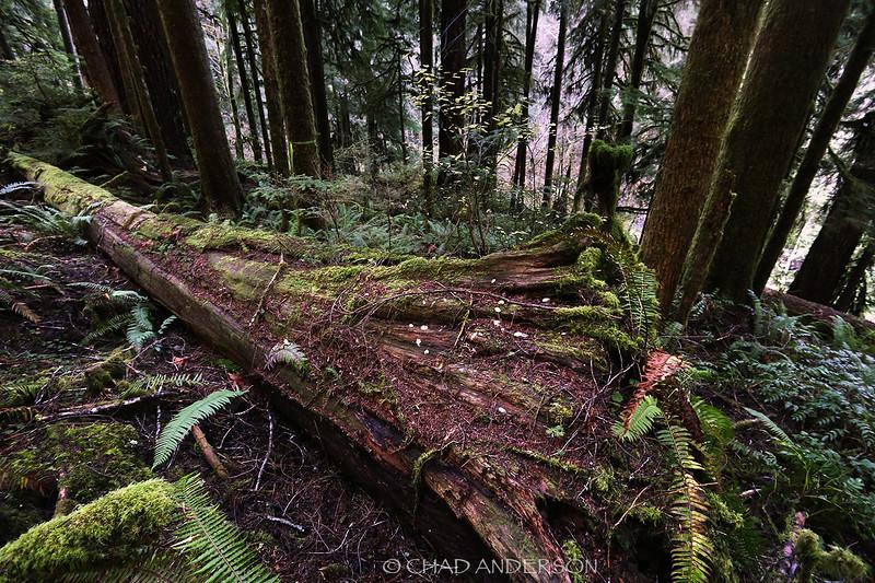 Doerner Trail 3