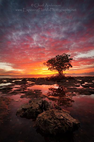 """""""Morning Glory""""<br /> <br /> National Key Deer Refuge, Big Pine Key, Florida"""