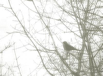 a single bird