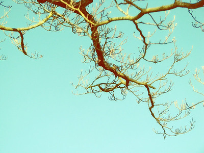 Berries + Branches