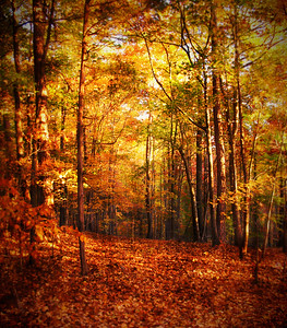 William B. Umstead State Park | Raleigh, North Carolina