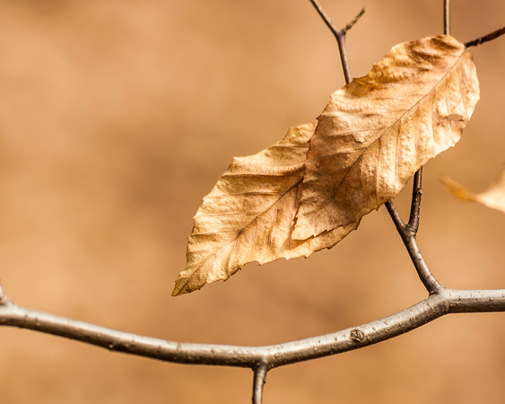 Folded Leaves