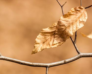 Folded Leaves