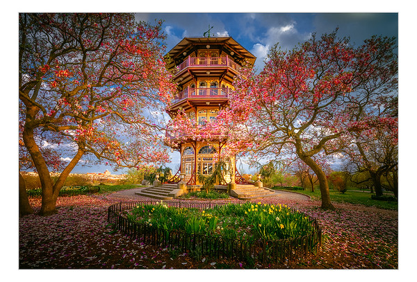Patterson Park Pagoda Series - Spring Bloom