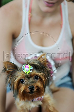 A dog dressed in a carnival costume takes part in the animals carnival, Copacabana, Brazil, February 3, 2013. (Austral Foto/Renzo Gostoli)