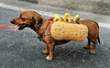 A dog dressed in a carnival costume, as a hot-dog,  takes part in the animals carnival, Copacabana, Brazil, February 3, 2013. (Austral Foto/Renzo Gostoli)