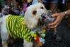 A dog dressed in a carnival costume, a T-shirt with Brazilian colours soccer team, takes part in the animals carnival, Copacabana, Brazil, February 3, 2013. (Austral Foto/Renzo Gostoli)