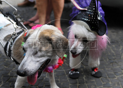 Dogs dressed in carnival costumes take part in the animals carnival, Copacabana, Brazil, February 3, 2013. The dog in a left side is paraplegic and blind of one eye. (Austral Foto/Renzo Gostoli)
