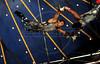 Unicirco, show, trapezistas, Rio de Janeiro, Brazil, Abril 7, 2012. (Austral Foto/Renzo Gostoli)