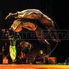 Unicirco show