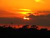 Florida sunsets (14)