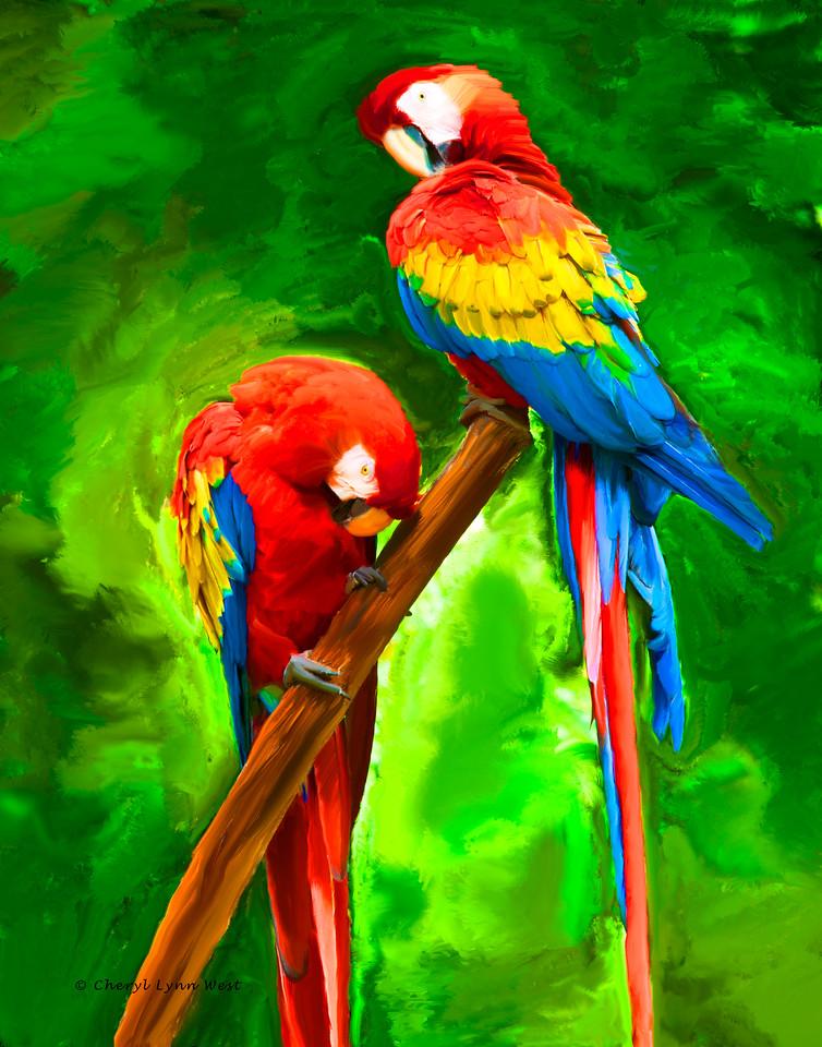 Macaws in Roatan, Honduras