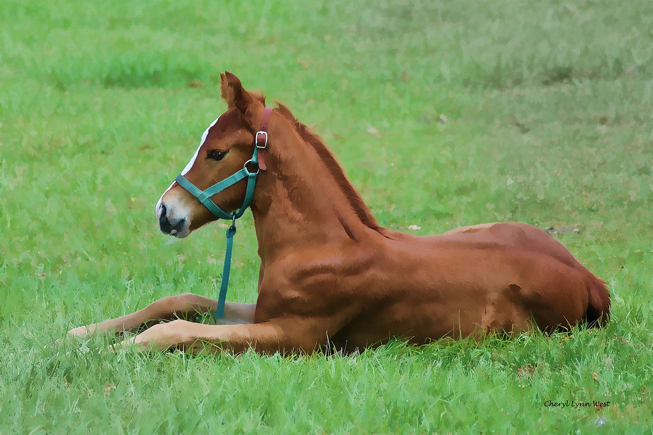 Foal in Ocala, Florida