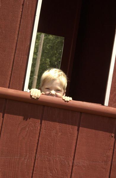 Gray in a window at Kutztown Folk Festival