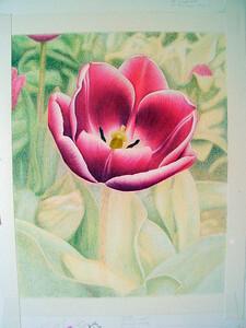 Tulip (unfinished)