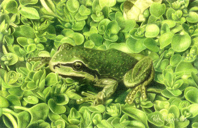 Frog in Corsican Mint